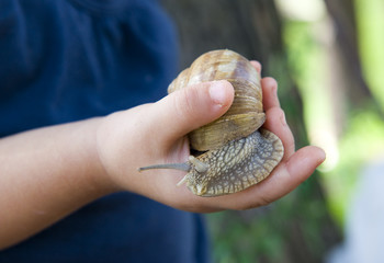 Child holds a giant edible snail.