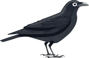 Crow - Illustration