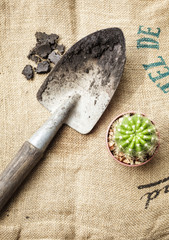 Gardening tools and cactus with soil on sack background