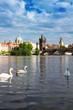 Leinwandbild Motiv Swans with background of Charles bridge