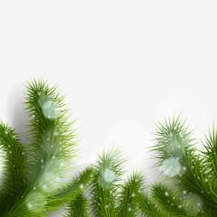 green Christmas tree branch