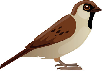 Sparrow - Illustration
