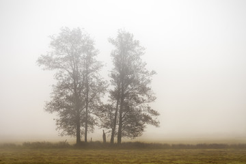 Bäume im Nebel © Matthias Buehner