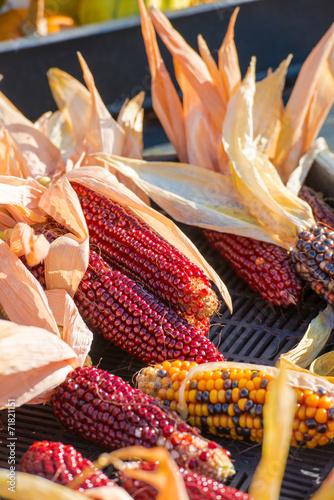canvas print picture colorful corn