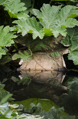 tropical leaves reflected in water