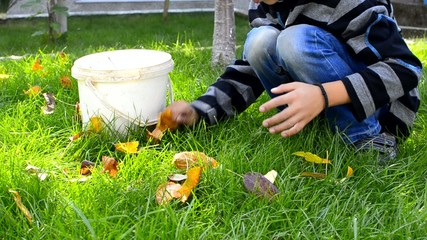 Little boy collecting, picking leaves in garden