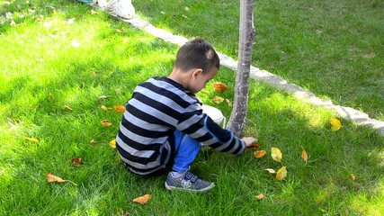 Boy collecting leaves in the park