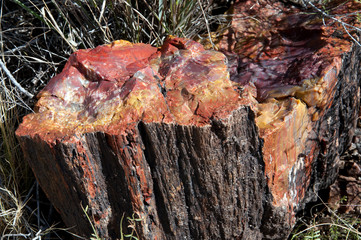 Petrified logs in Petrified Forest National Park.