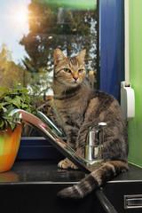 chat tigré dans cuisine