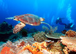 Leinwanddruck Bild - Green Sea Turtle near Coral Reef, Bali
