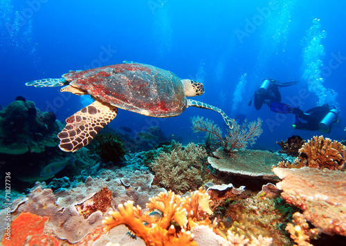 Fotobehang Koraalriffen Green Sea Turtle near Coral Reef, Bali
