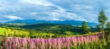 letní horské panorama země gliczarów gorny polsko