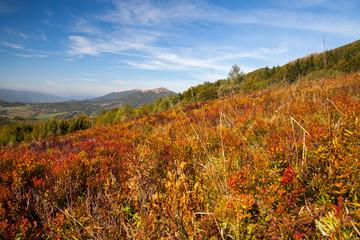 Panorama on Carpathians mountains.