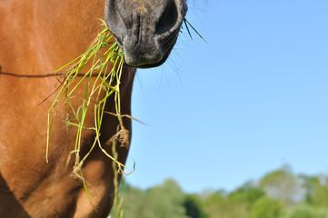 gros plan naseaux cheval