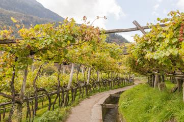 Algund, Dorf, Vinschgau, Waalweg, Algunder Waalweg, Italien