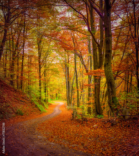 Dark forest road in the autumn forest. - 71832788
