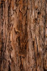wood pine bark textured brown