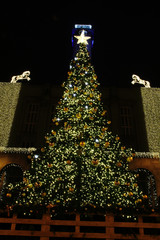 christmas tree in Ostrava