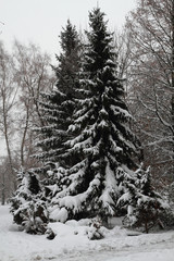winter tree in the snow