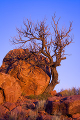 Dead Tree in Abiquiu
