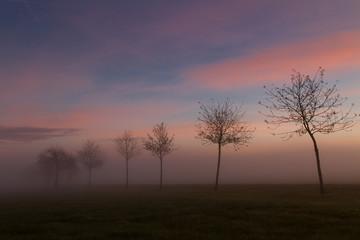 Morgennebel ©yvonneweis