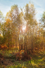 forest in autumn time