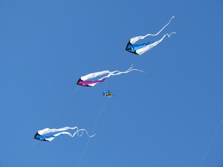 Tubans dans le ciel bleu