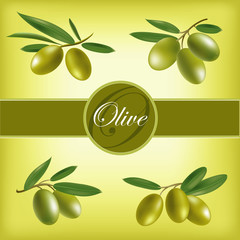 Vector set of olive branches