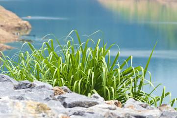 Green grass 005