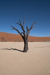Deadvlei, Namib-Naukluft-Nationalpark, Namibia