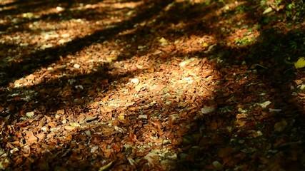 Herbstwald im Licht und Schatten