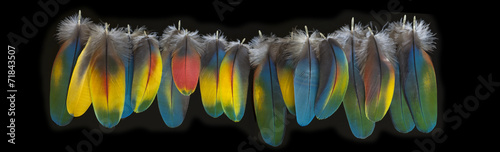 Foto op Canvas Papegaai Macaw feather isolated on black background. BIg panorama.