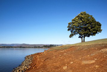 Lonely Tree on the Shore of Midmar Dam
