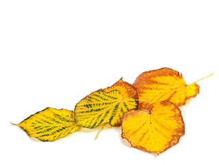 Autumn multicolored leafs at corner