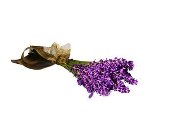 Lavendel vor weißem Hintergrund