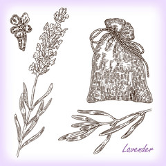 Collection of hand drawn plant lavender. Vector illustration