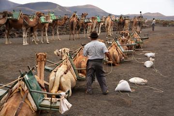 pastor de camellos en el desierto