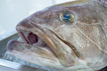 buzda yatan balık