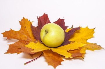 Red apple on autumn maple leaves on the white background