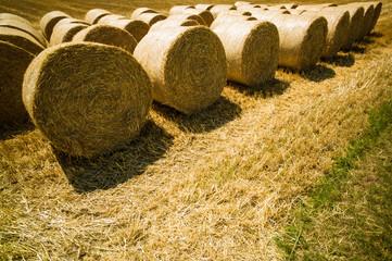 Ballen von Stroh und Getreide auf einem Feld