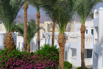 Palm trees in luxury hotel