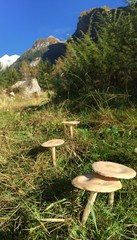 Funghi in Val di Mello