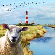 herbstliches Nordfriesland