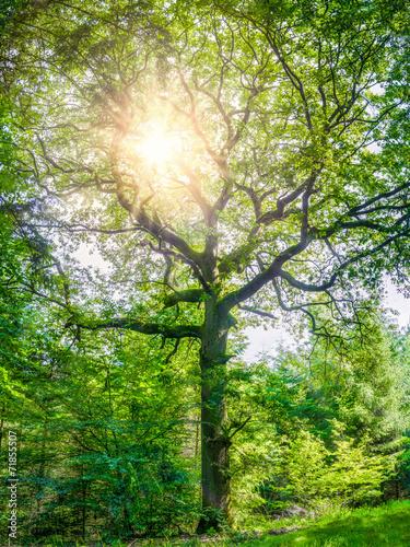 Tuinposter Lente Lebensbaum