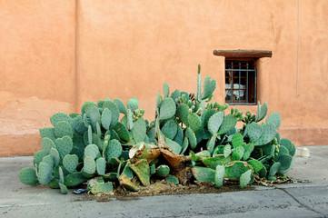 New Mexico Cactus.