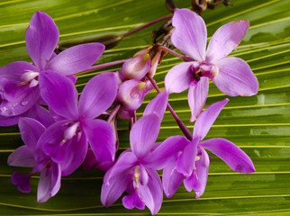 Branch orchid with green palm tree leaf as a background