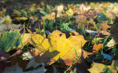 pożółkłe jesienne liście