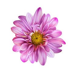 Pink Mona Lisa flower, flower