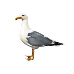 white bird seagull standing