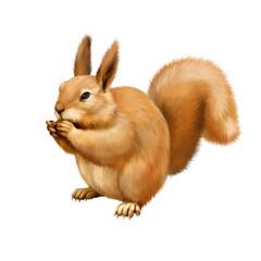 Red Squirrel, Sciurus Vulgaris, sitting eating